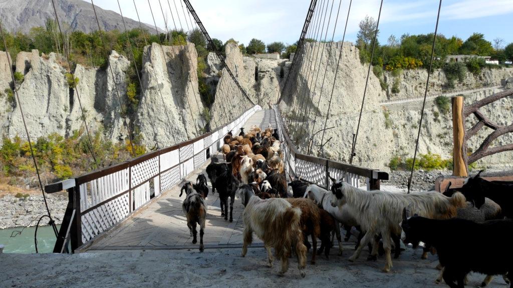 Wir haben es gerade bevor die Ziegen gekommen sind über die Brücke geschafft