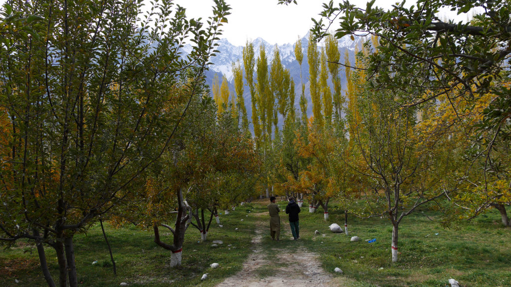 Kävelyllä omenapuutarhassa