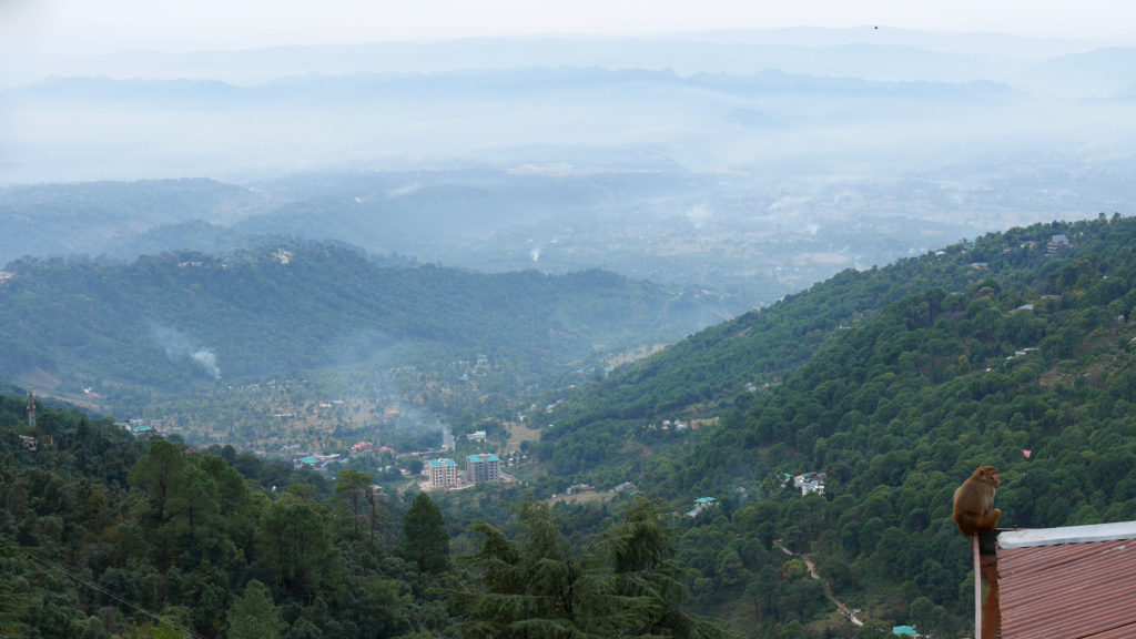 A monkey looking over Dharamshala