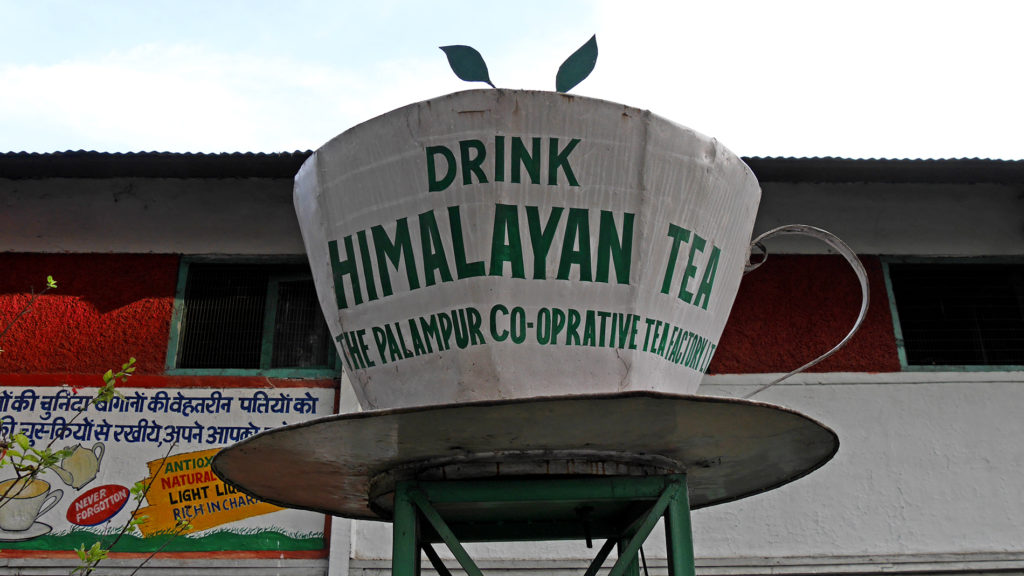 Palampur is known for Kangra tea