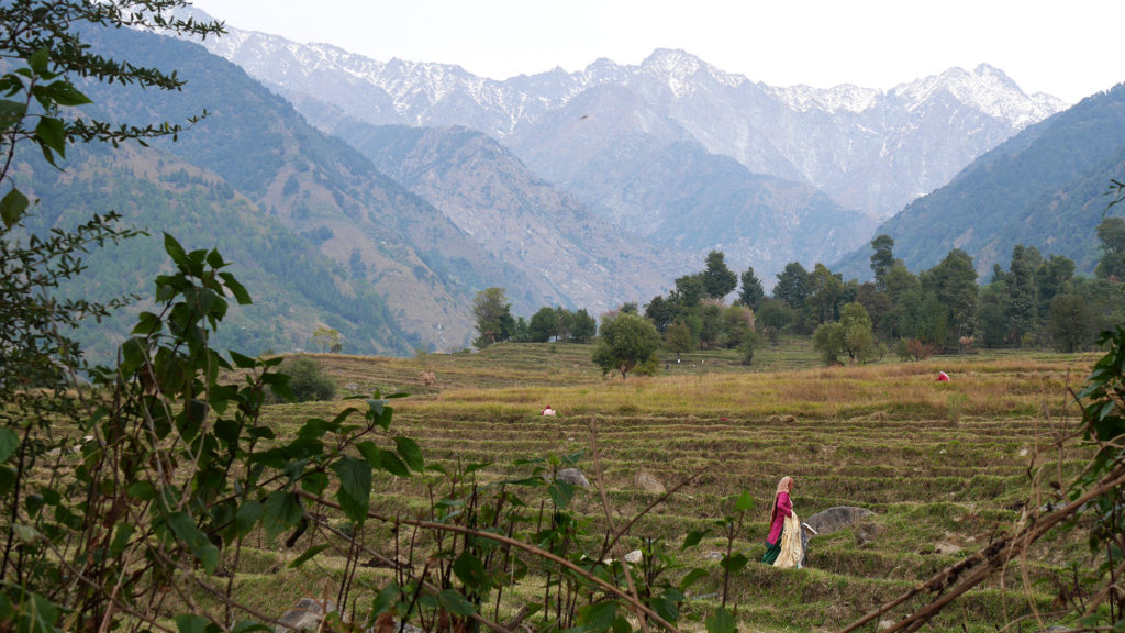 On the hills of Palampur