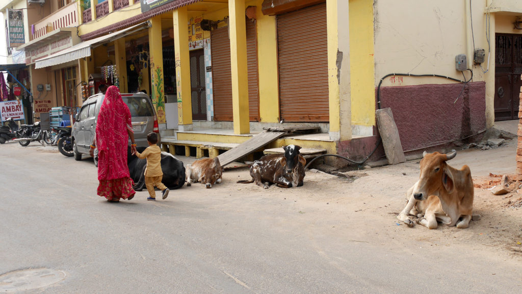As cows are holy in Hinduism, you can see them everywhere in Pushkar
