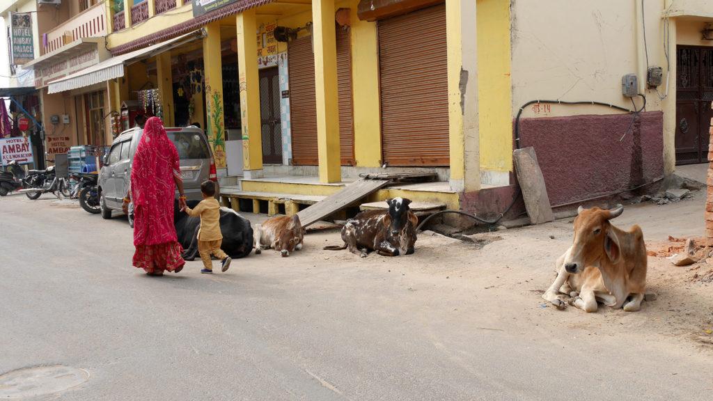 Da Kühe im Hinduismus heilig sind, findet man sie in Pushkar überall