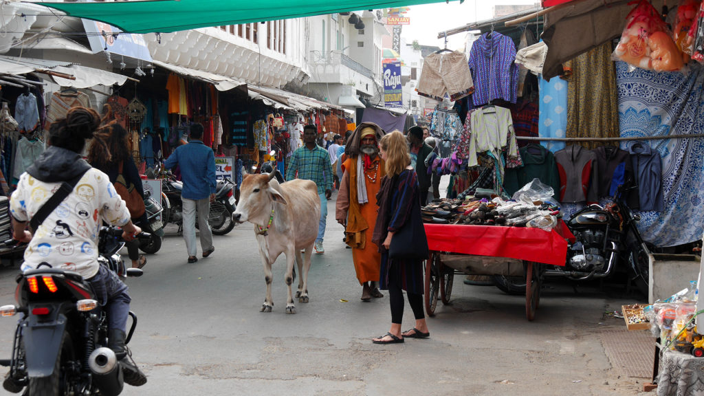 Holy cows, holy men and a lot of shops