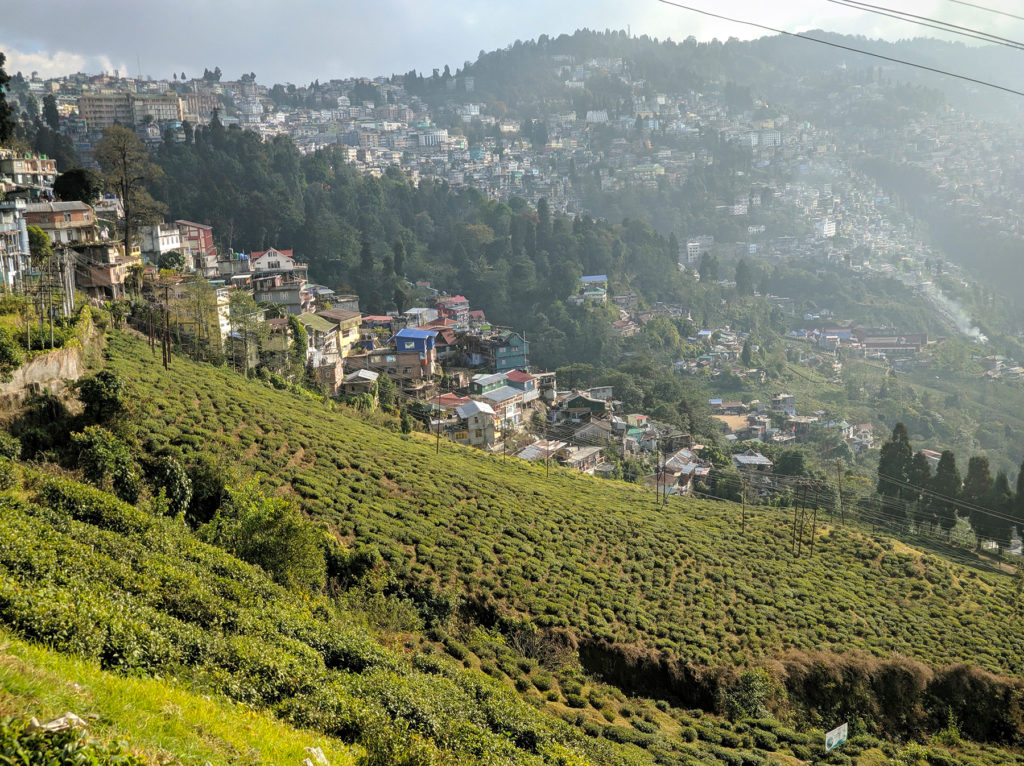 Happy Valley's tea garden and the city of Darjeeling in the background