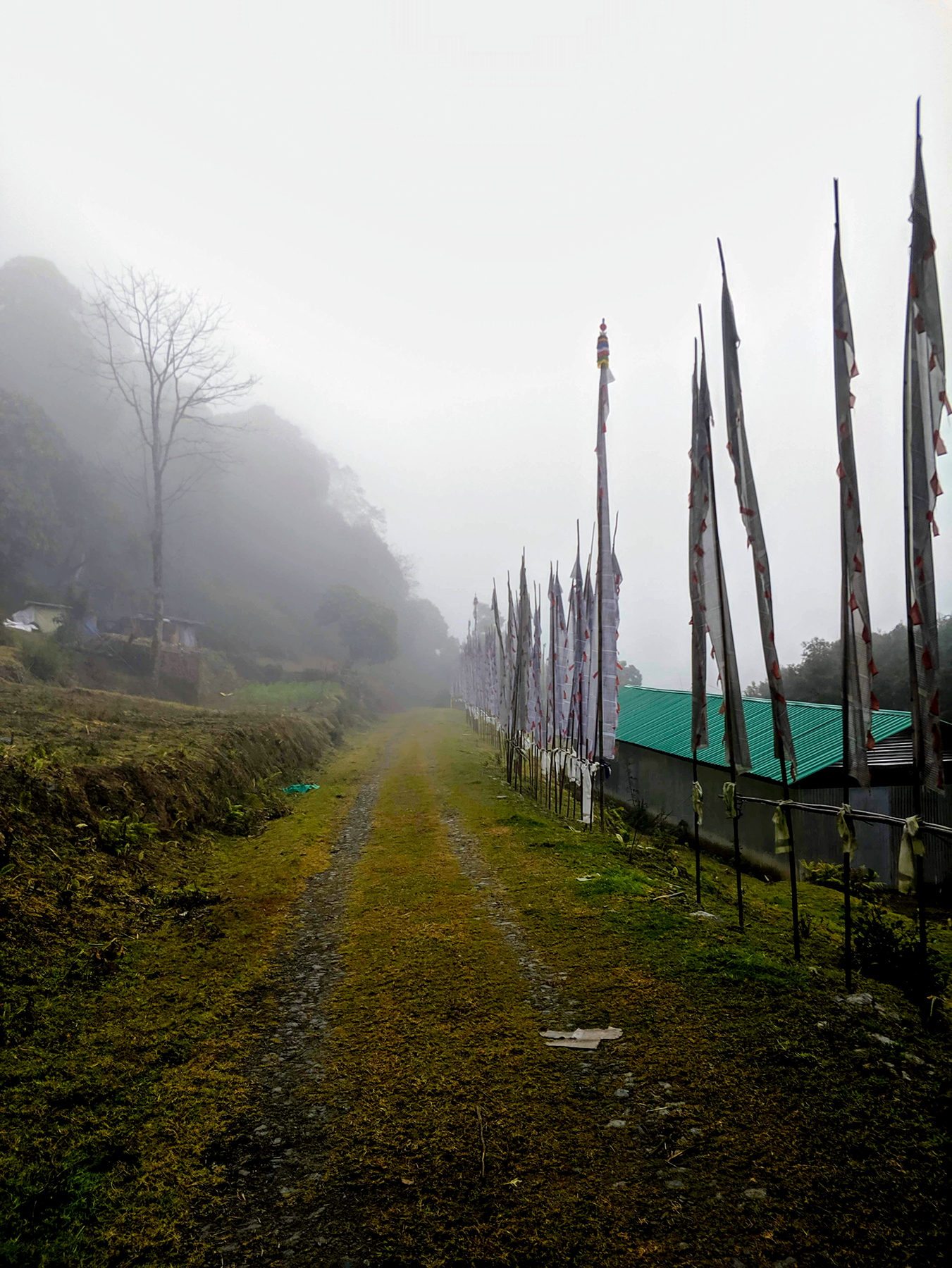 Fog before the rain on our way to Pemayangtse Monastery