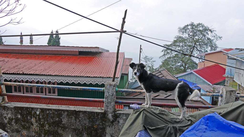 A dog we met on the way. Many houses in Darjeeling have beautiful decorations at the sides of the roof, like this one.