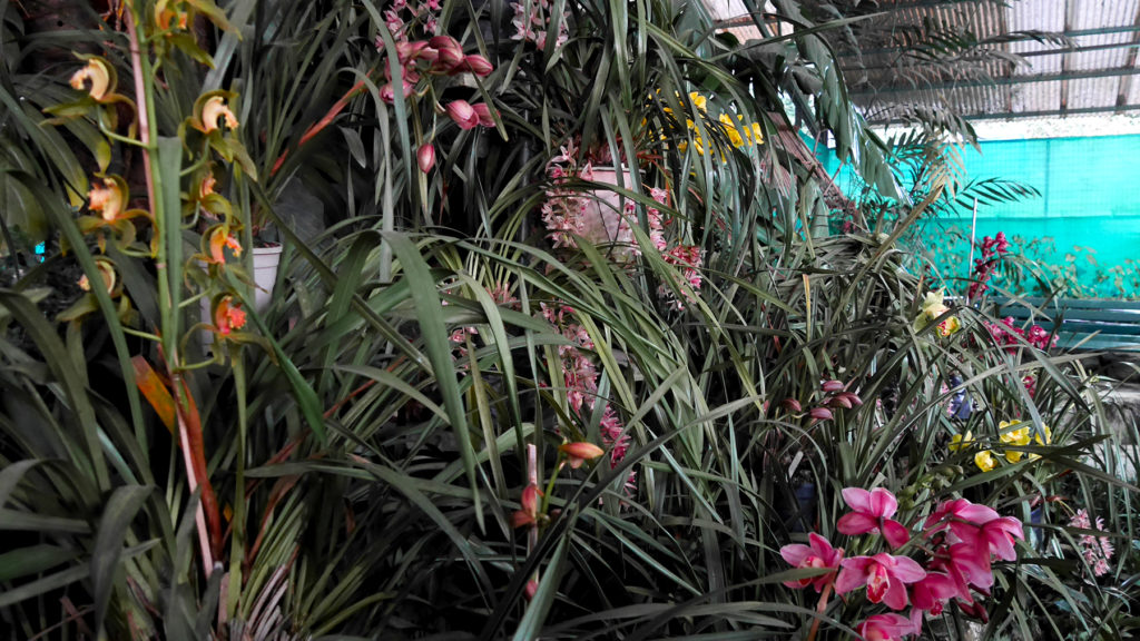 Some of the over 200 orchids at the Deorali Orchid Sanctuary