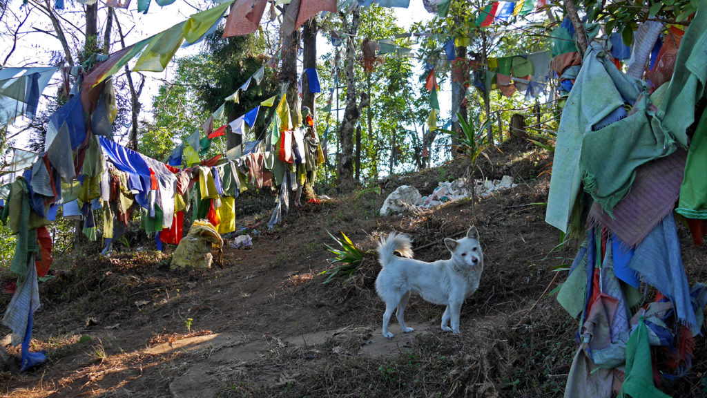 Johanna has fallen in love with this kind of little white dogs that we also met in Darjeeling