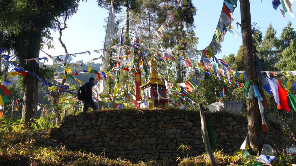 The forest was filled with prayer flags