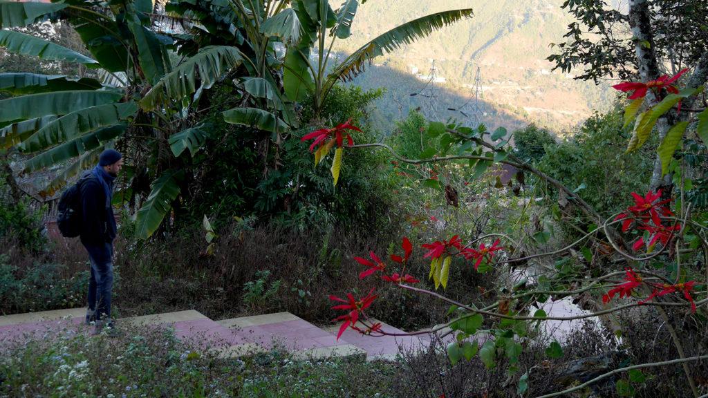 Tämmöiset valtavat joulutähdet kukkivat ympäri Sikkimiä