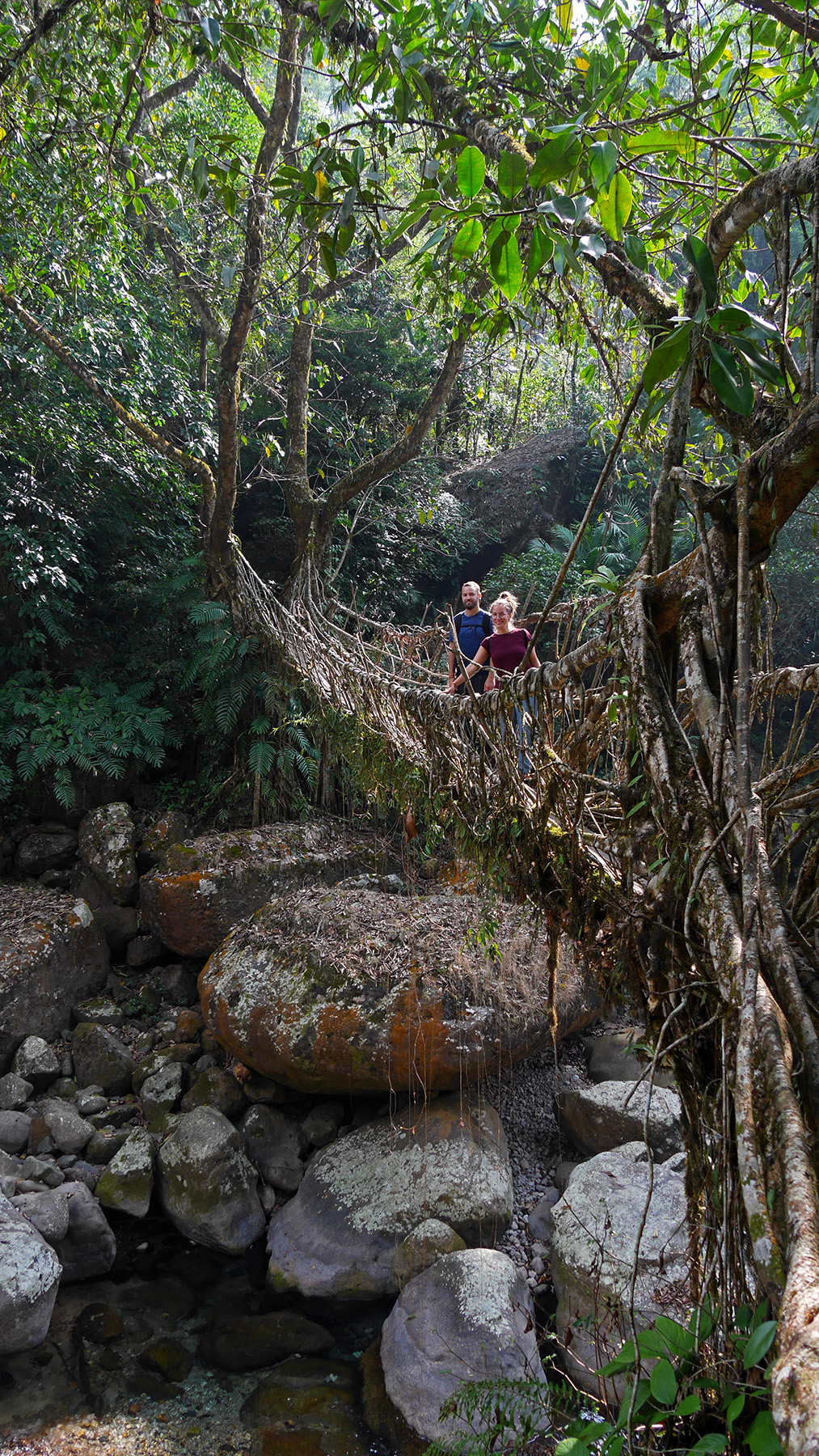 The longest living root bridge of the area