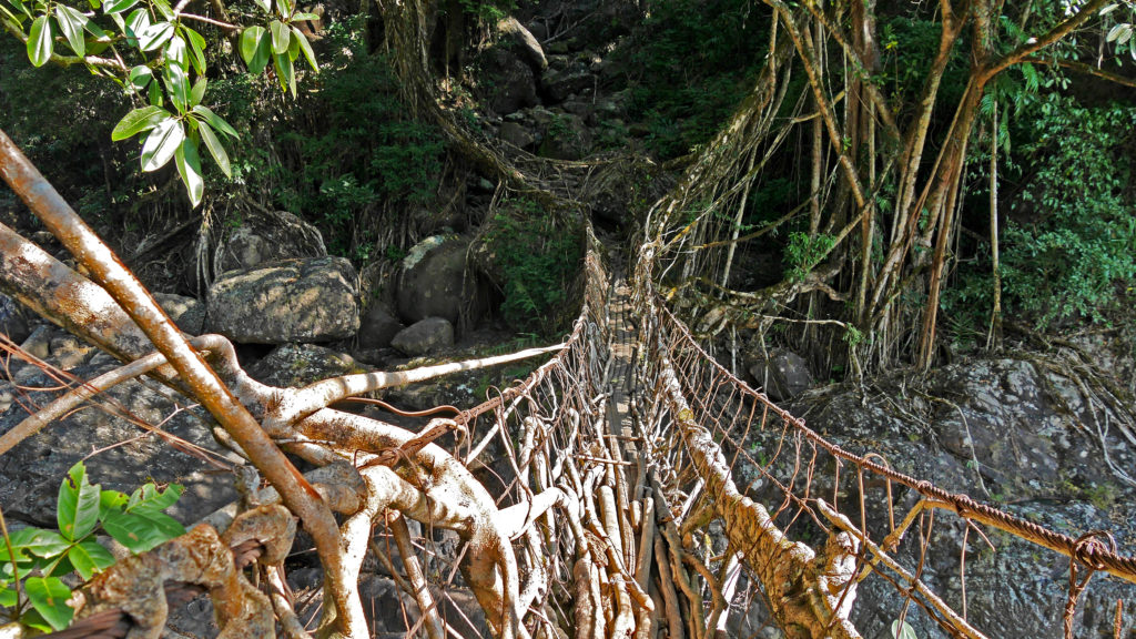 The living root bridges of Meghalaya