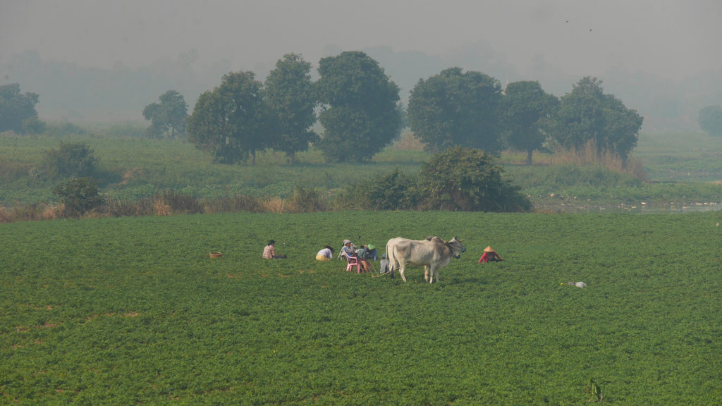 Locals working in the field