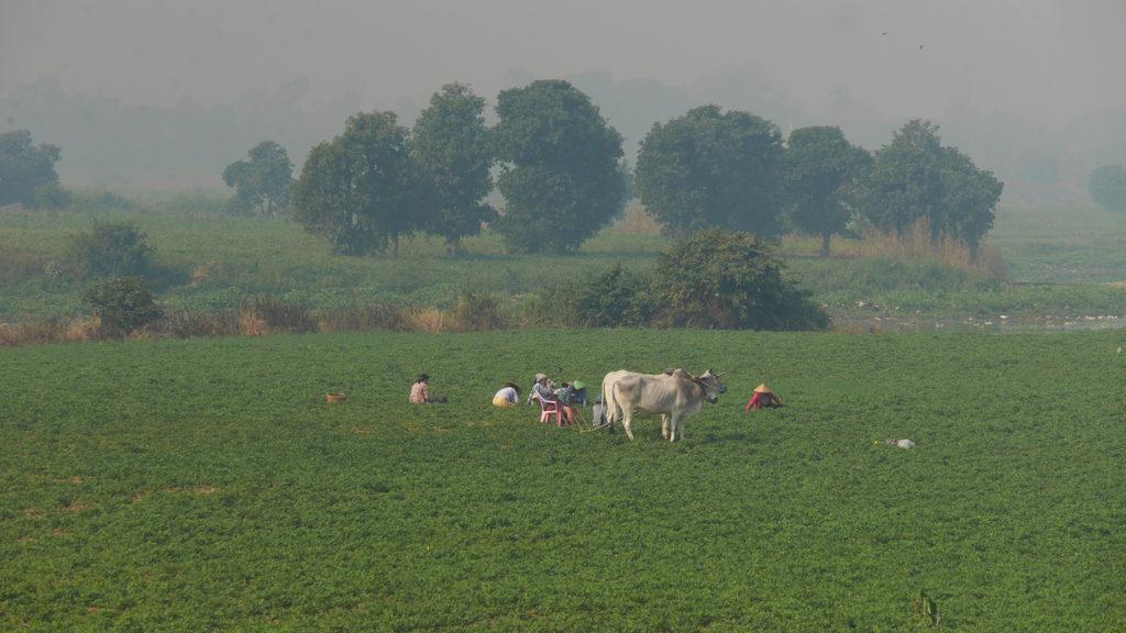 Einheimische bei der Arbeit in den Feldern