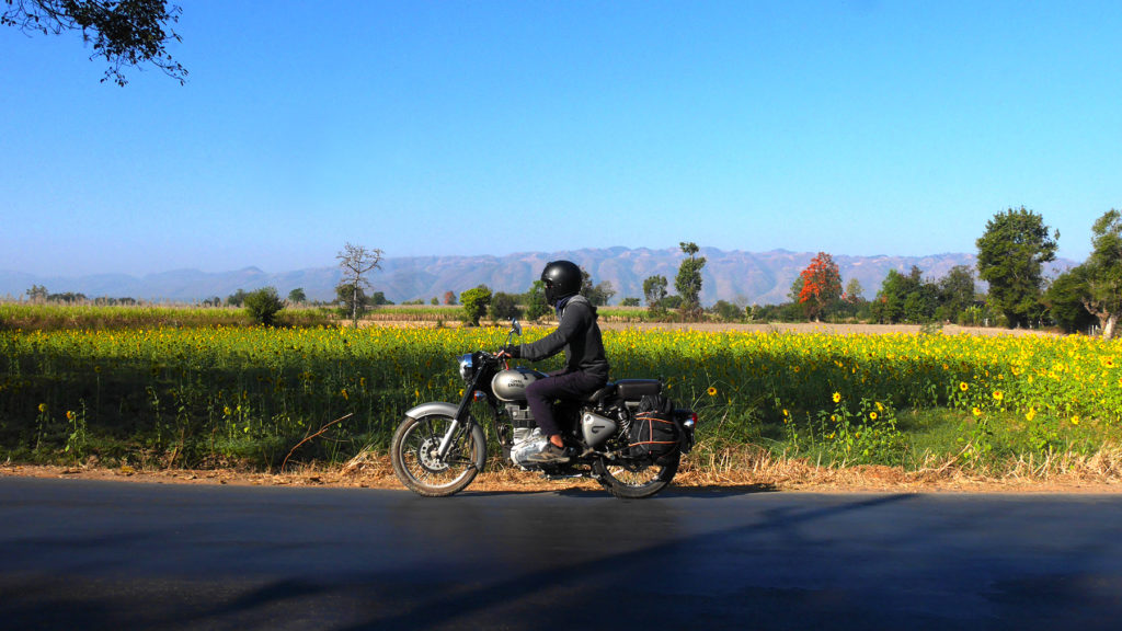 Sun flower fields at the Inle area